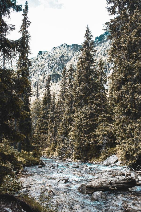 Weg durch das hohe Tatras stockbilder