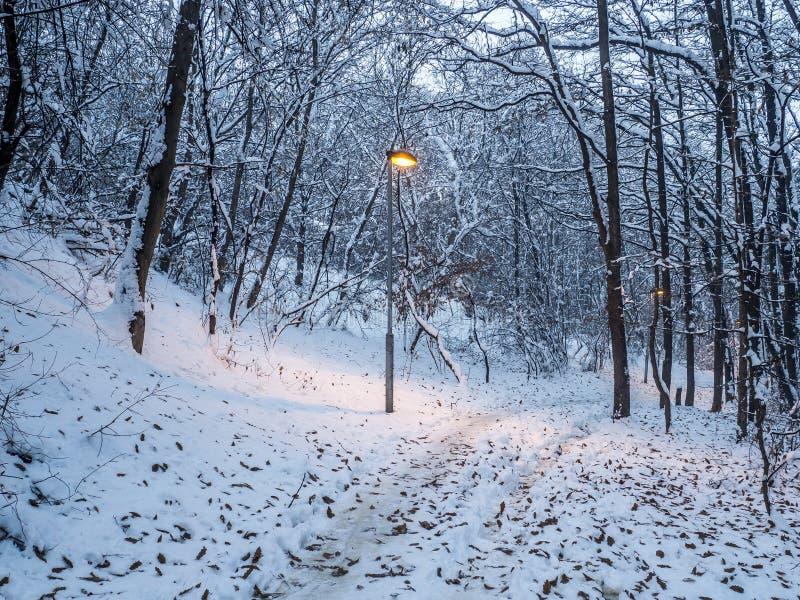 Weg durch das kleine schneebedeckte Holz stockbild