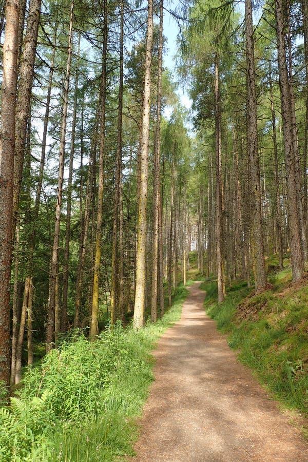 Weg durch den Wald bei Rogie fällt, Hochländer, Schottland, lizenzfreies stockfoto