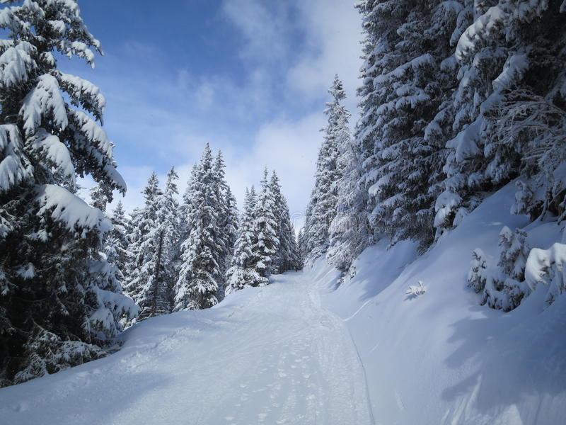 Weg durch den Wald im Winter stockbilder