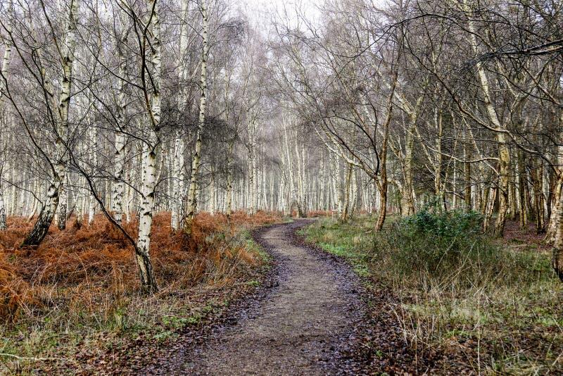 Weg durch die Bäume stockfotografie