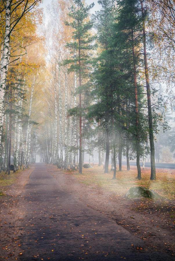 Weg durch ein nebelhaftes und einen Herbst stockbild