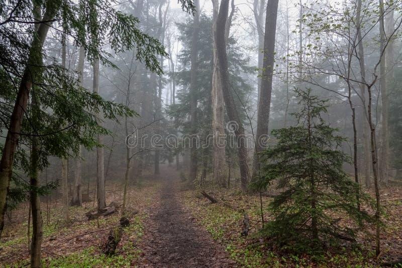 Weg durch einen nebeligen Wald im Frühjahr stockbild