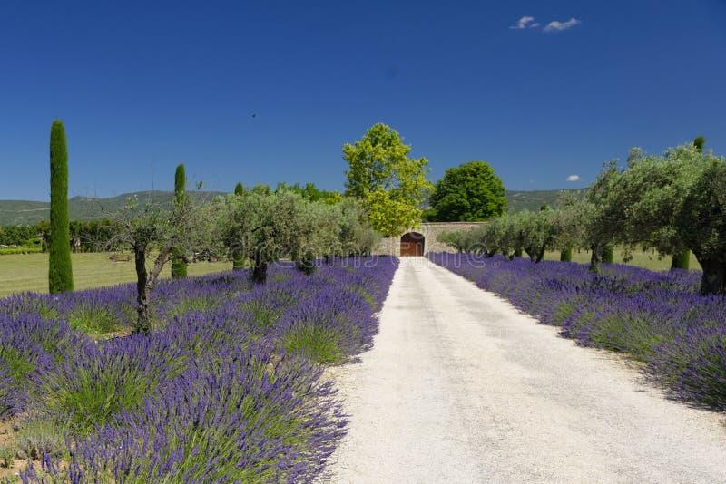 Weg durch Lavendel lizenzfreies stockfoto