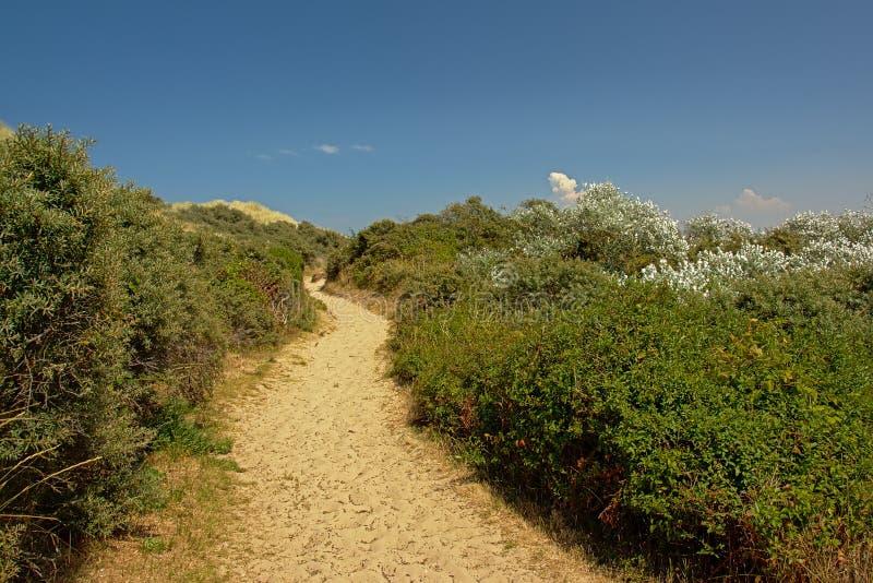 Weg durch Sträuche in den Dünen entlang der Opal North Sea-Küste stockfotos