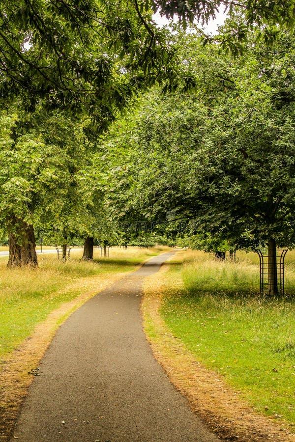 Weg durch Wald im Spätsommer, Irland stockfotografie