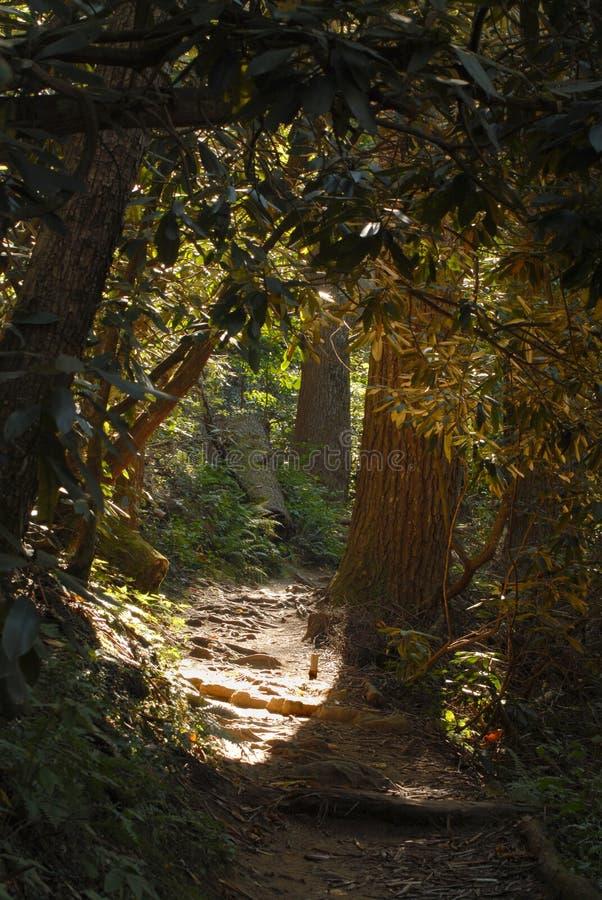 Weg in een bos stock afbeelding