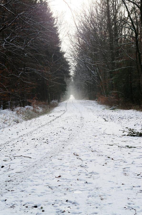 Weg in een de winterbos royalty-vrije stock afbeelding