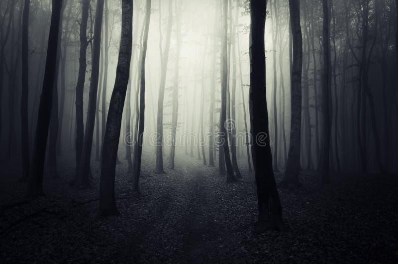 Weg in een donker geheimzinnig bos op Halloween stock foto's