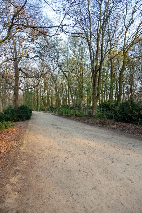 Weg in een droog bos bij zonsondergang royalty-vrije stock foto's