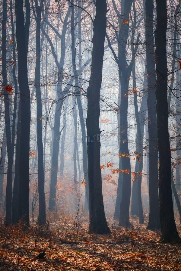 Weg in een eiken bos in de herfsttijd in een mistige dag stock fotografie