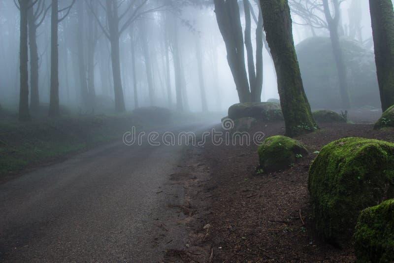 Weg in een Geheimzinnig donker oud bos met mist royalty-vrije stock foto's