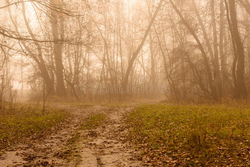 Weg in een mistig bos op koude de herfstdag royalty-vrije stock afbeeldingen