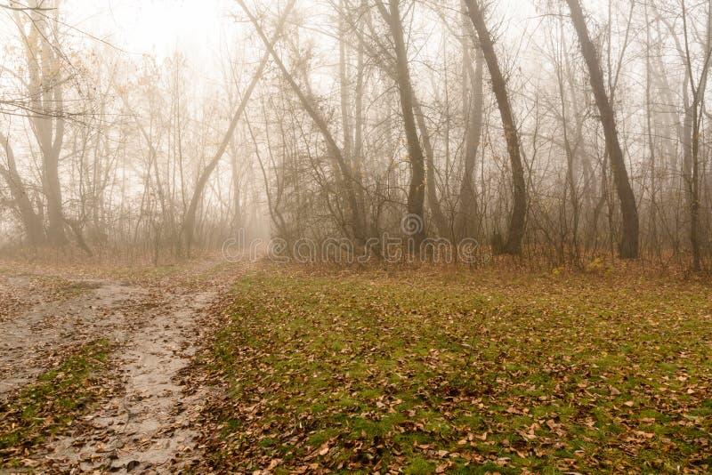 Weg in een mistig bos op koude de herfstdag royalty-vrije stock foto's