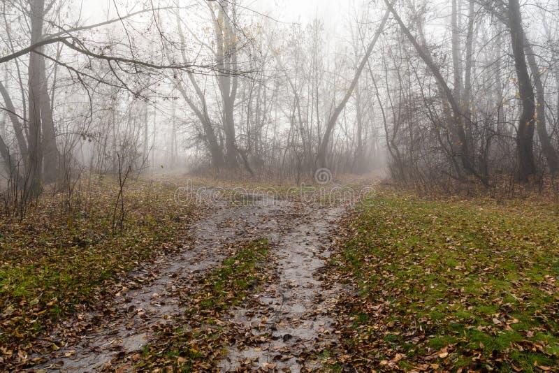 Weg in een mistig bos op koude de herfstdag royalty-vrije stock afbeelding