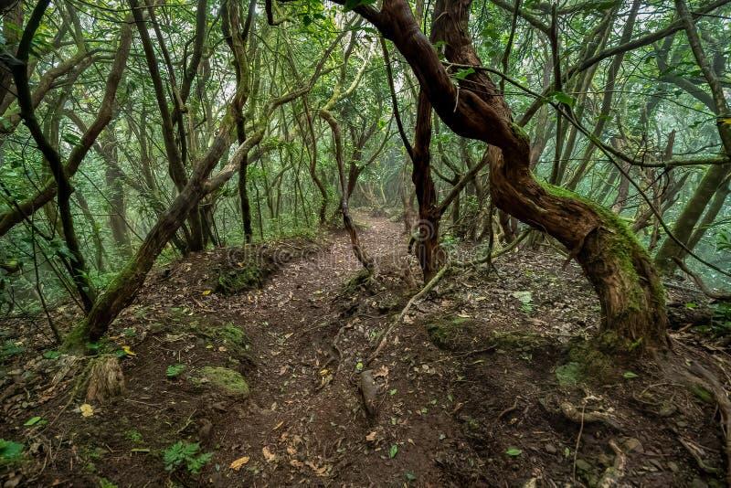 Weg in een mossy, vochtig bos royalty-vrije stock afbeeldingen