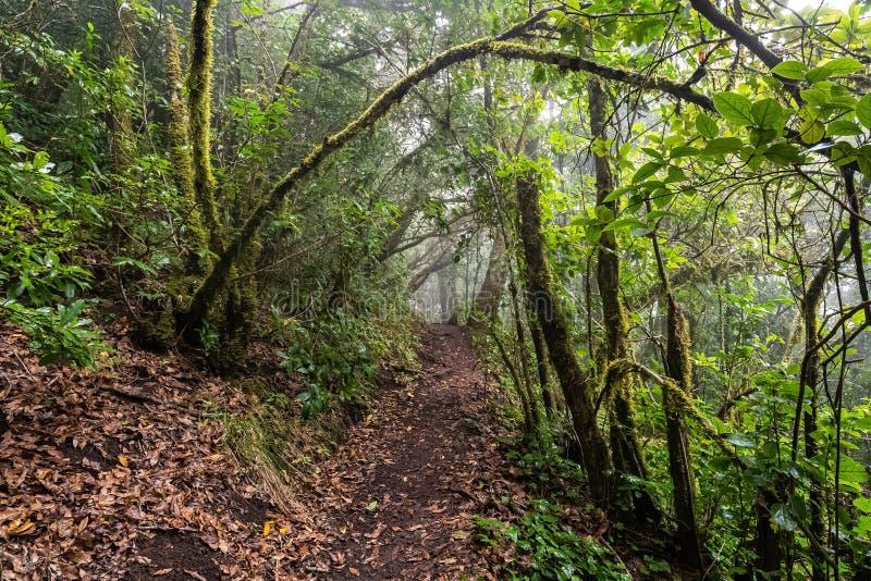 Weg in een mossy, vochtig bos stock foto's
