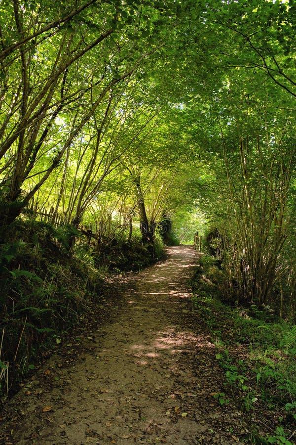 Weg in einem Wald in Asturien, Spanien stockfoto