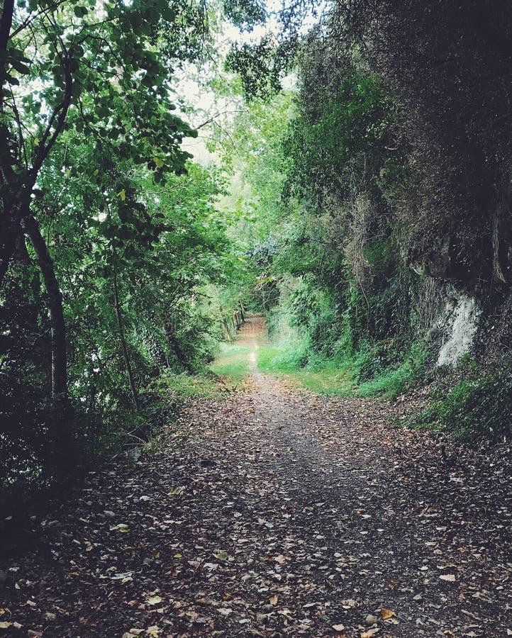 Weg in einem Wald am Herbst lizenzfreies stockbild