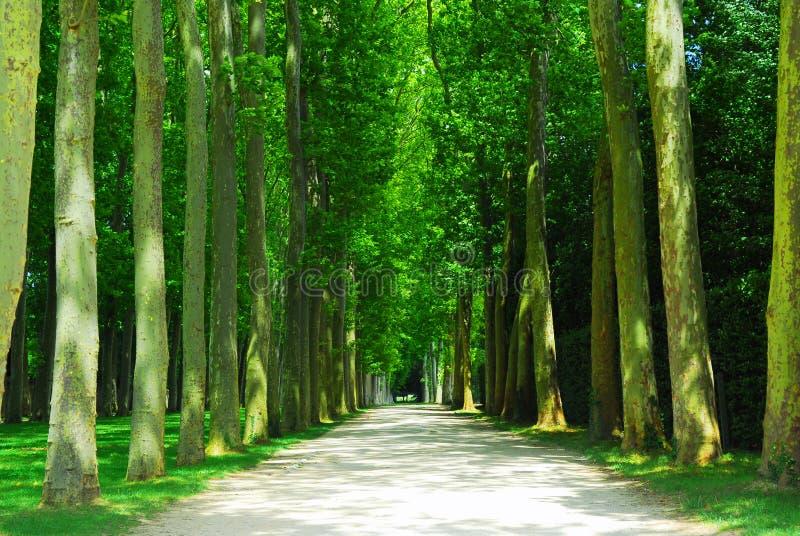 Weg en bomen royalty-vrije stock foto's