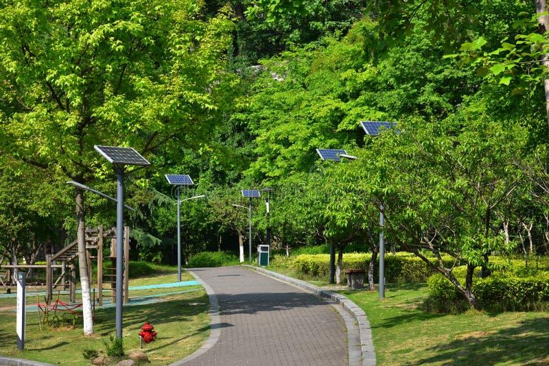 Download Weg en bomen stock afbeelding. Afbeelding bestaande uit landscaping - 54084681