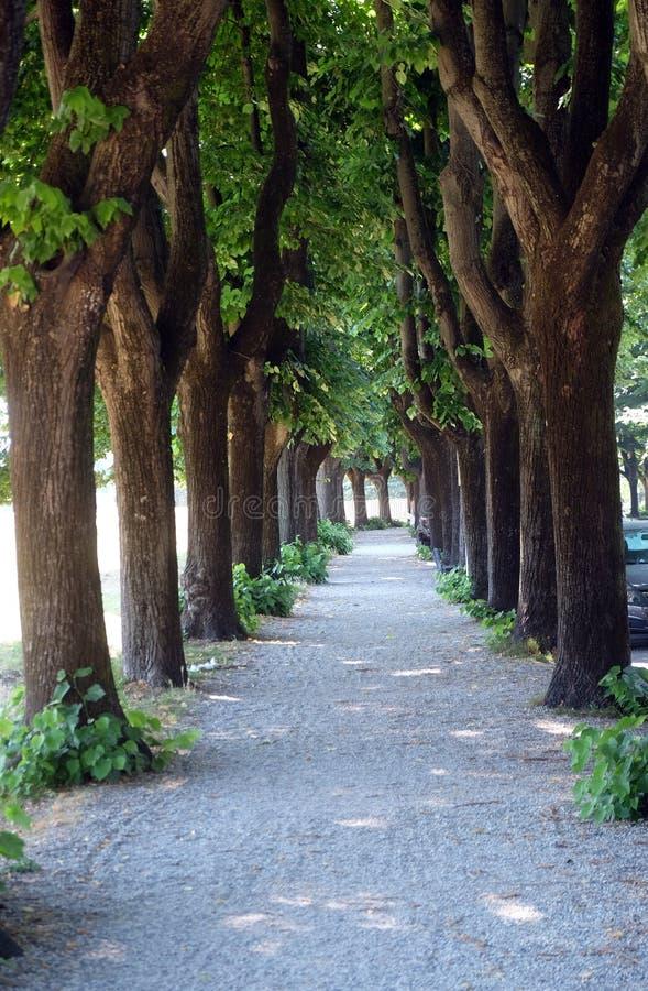 Weg en bomen langs de vestingwerken van de stadsmuur, Luca, Italië royalty-vrije stock afbeelding