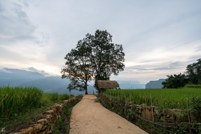 Weg en grote boom met terrasvormig padieveldlandschap van Y Ty, het district van Knuppelxat, Lao Cai, Noord-Vietnam royalty-vrije stock foto's
