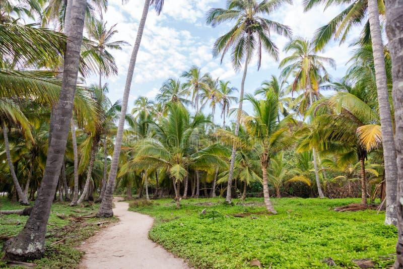 Weg en Palmen stock afbeeldingen