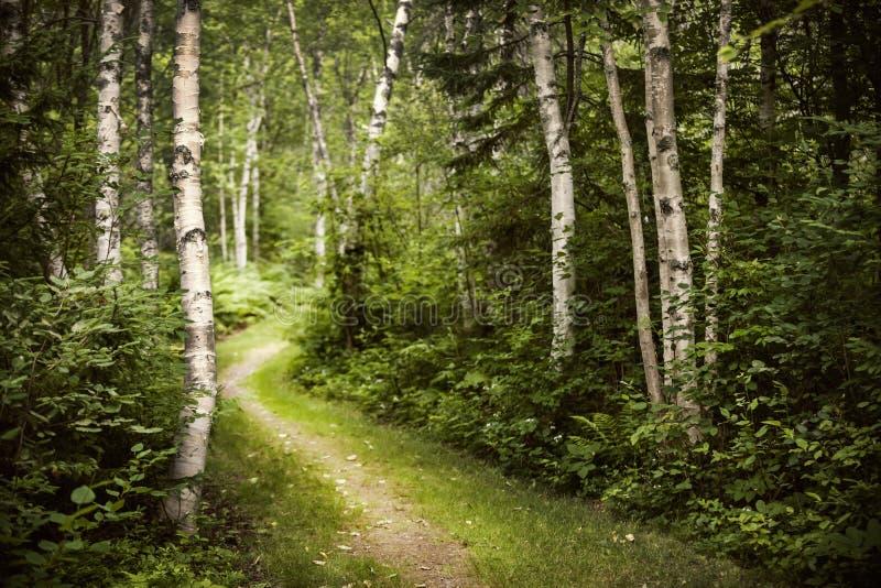 Weg in groen de zomerbos stock afbeeldingen