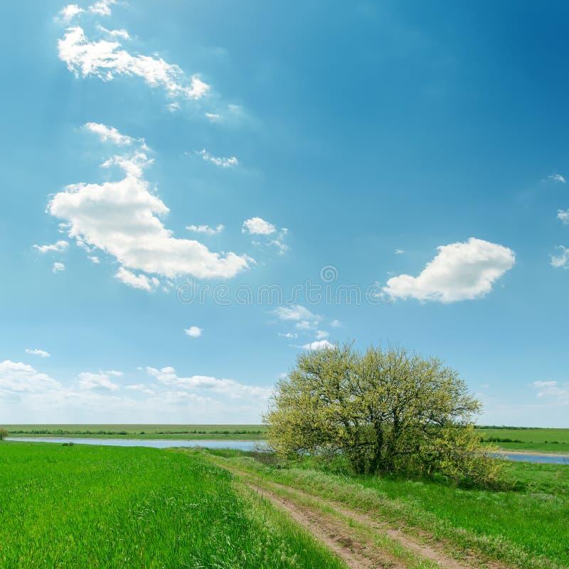 Weg in groen gras en blauwe hemel met wolken royalty-vrije stock afbeelding