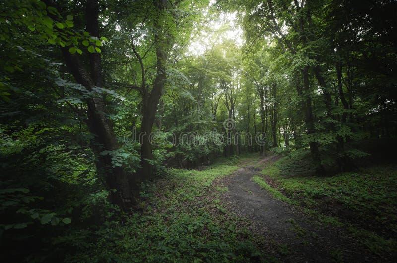 Weg in groen natuurlijk bos royalty-vrije stock foto's