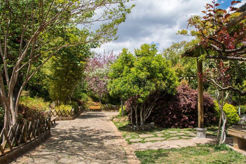 Weg in groen park stock foto's