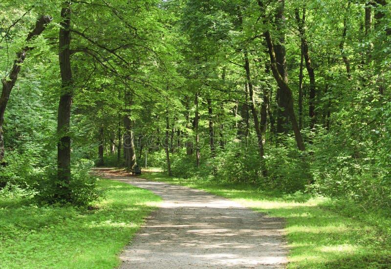 Weg in het bos stock fotografie