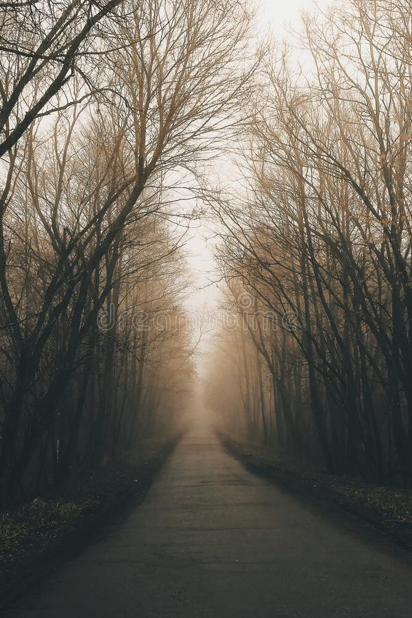 Weg in het bos in de herfstdag foggy royalty-vrije stock foto