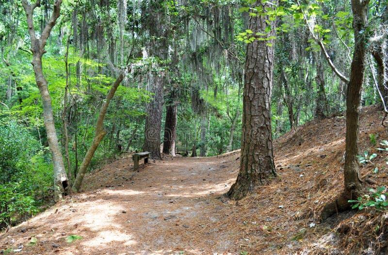 Weg in het bos, het Eerste Landende Park van de Staat, VA stock afbeeldingen