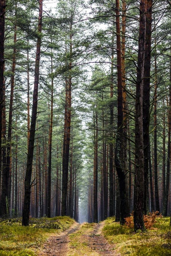 Weg in het bos op een mistige dag, geheimzinnig bos royalty-vrije stock afbeelding