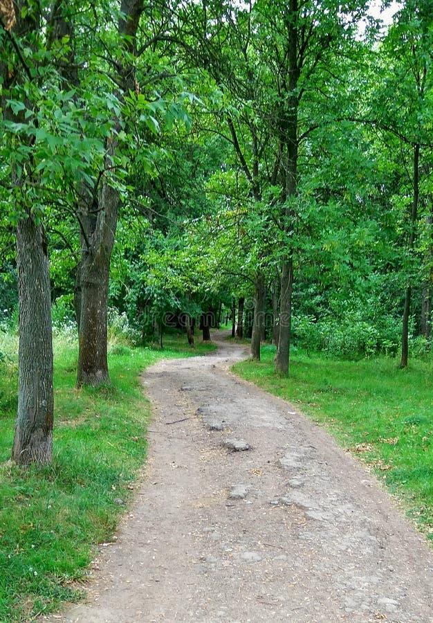 Weg in het bosje woods royalty-vrije stock fotografie