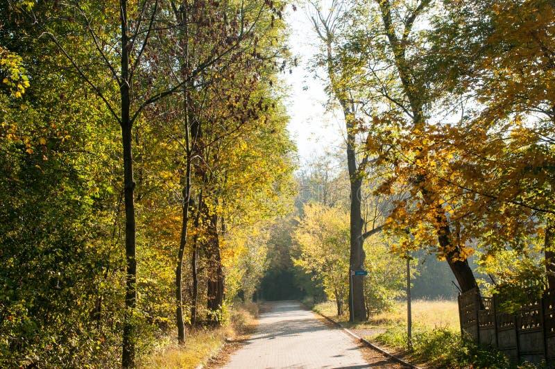 Weg in het de herfstbos stock foto