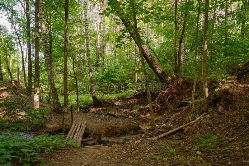 Weg in het de zomerbos met een kleine houten brug royalty-vrije stock afbeelding