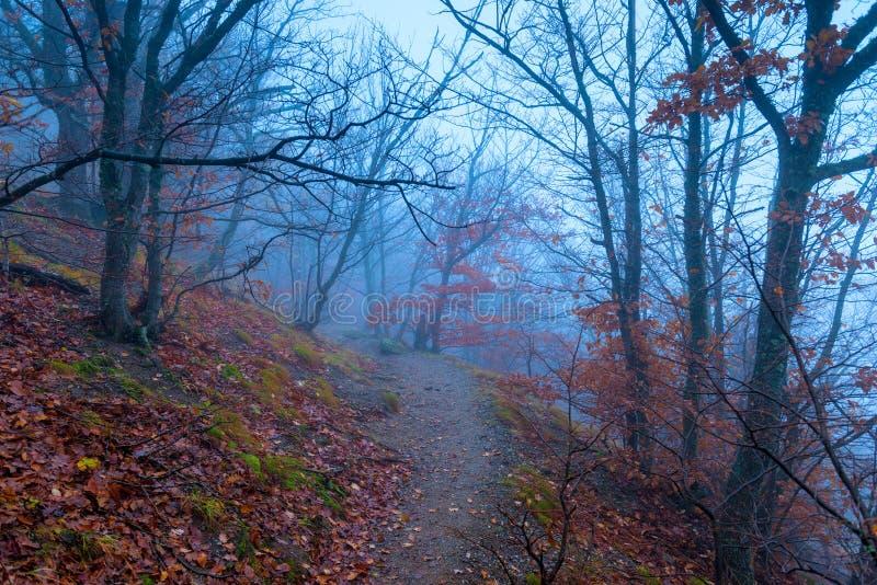 Weg in het donkere nevelige bos in de bergen stock afbeeldingen