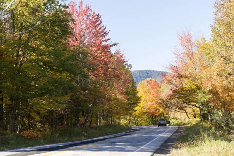 Weg in het Gebladerte van Vermont royalty-vrije stock fotografie