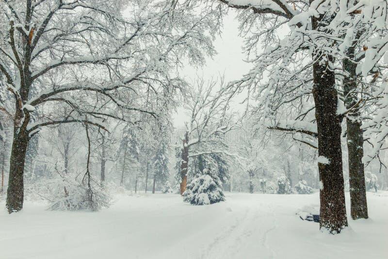 Weg in het hout in de winter, de natuurlijke achtergrond van het de winterlandschap stock afbeeldingen