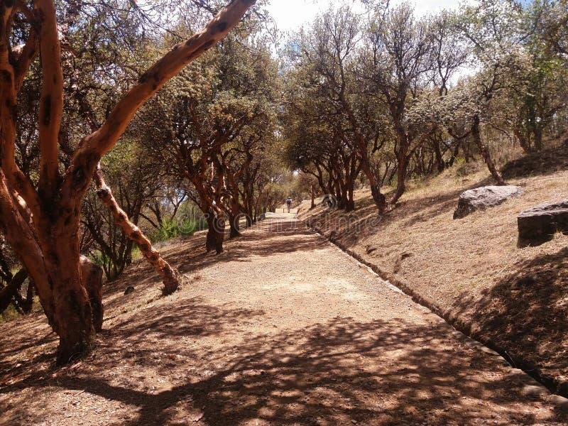 weg in het midden van bomen royalty-vrije stock foto's
