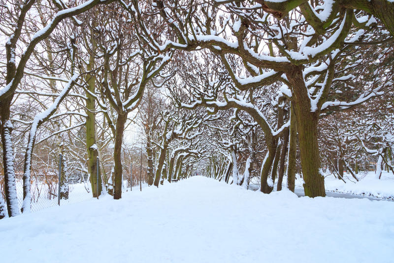 Weg In Het Park Bij De Sneeuwwinter Stock Fotografie