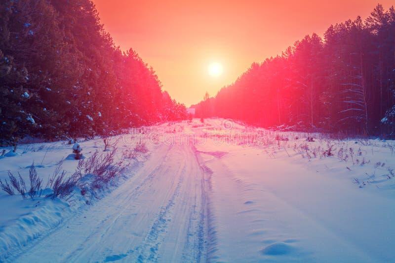 Weg in het sneeuwbos van de pijnboomwinter royalty-vrije stock afbeeldingen