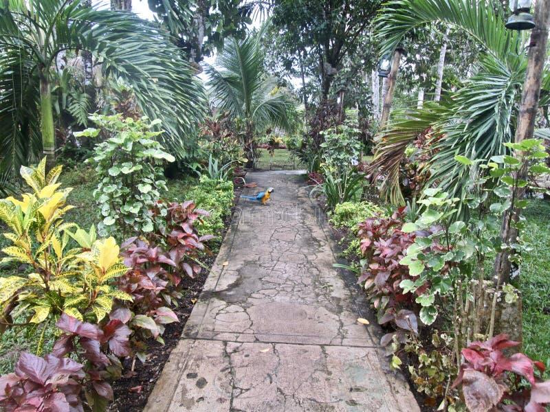 Weg im Dschungel mit einem Papageien lizenzfreie stockfotografie