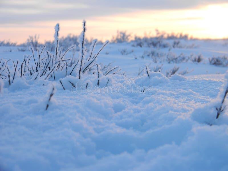 Weg im flaumigen Schnee lizenzfreie stockfotografie