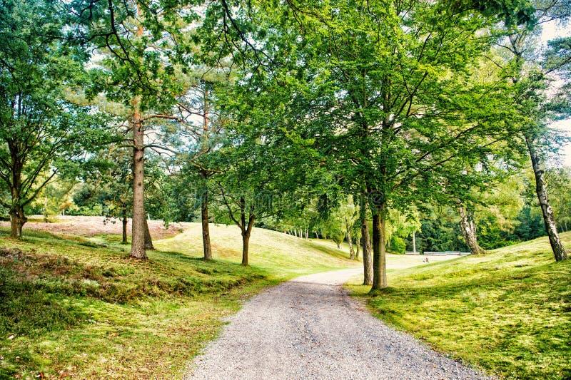 Weg im Frühjahr oder Sommerwald, Natur Straße in der hölzernen Landschaft, Umwelt Fußweg unter grünen Bäumen, Ökologie stockfotografie