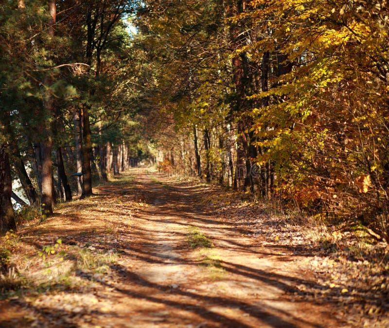 Weg im Herbstwald in den Strahlen des aufgehende Sonne lizenzfreies stockbild