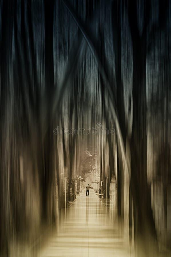 Weg im L mystischer Wald lizenzfreie stockfotos